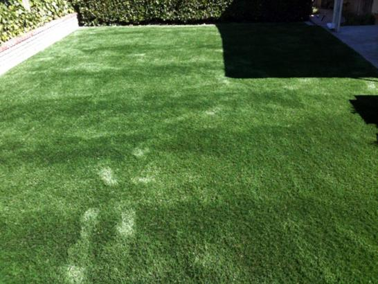 Artificial Grass Photos: Artificial Turf Coral Gables, Florida Pet Paradise, Backyard Landscaping Ideas