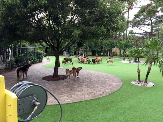 Artificial Grass Photos: Artificial Turf Limestone Creek, Florida Lawns, Commercial Landscape