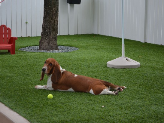 Artificial Grass Photos: Installing Artificial Grass Arcadia, Florida Drainage, Dogs Park