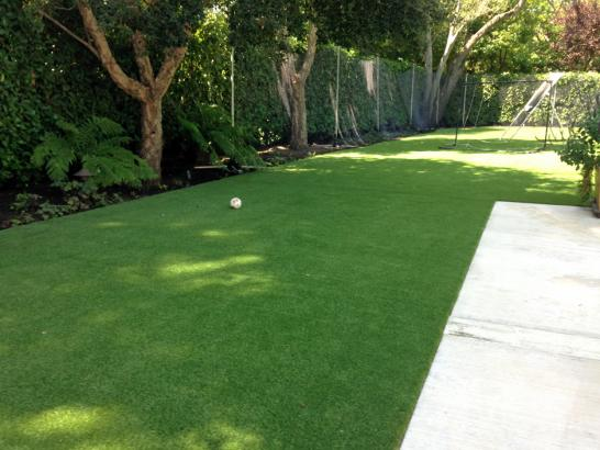 Artificial Grass Photos: Outdoor Carpet Bay Lake, Florida Garden Ideas